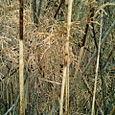 tawny browns
